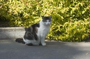 Наш единственный пражский кот