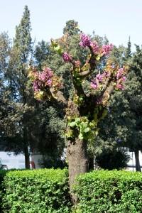 А под деревьями христианские катакомбы