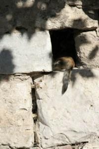 Крепостная стена Коса