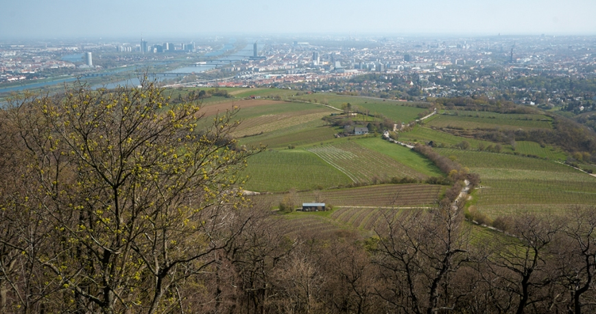 Венские холмы