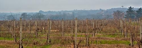 Умбрийские виноградники